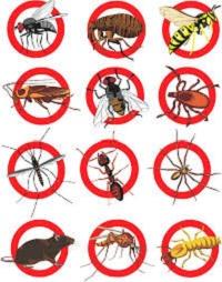 Pest Control & Eradication