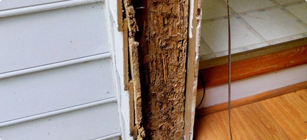 how to tell if old wood has termites