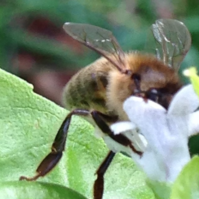 Bee Control & Removal