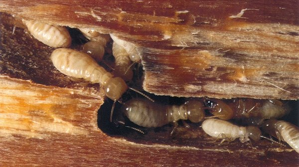 Signs Your Property Has Termites