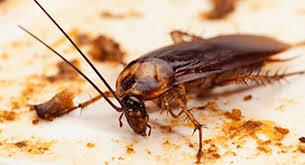 Jim's Termite & Pest Control Sydney
