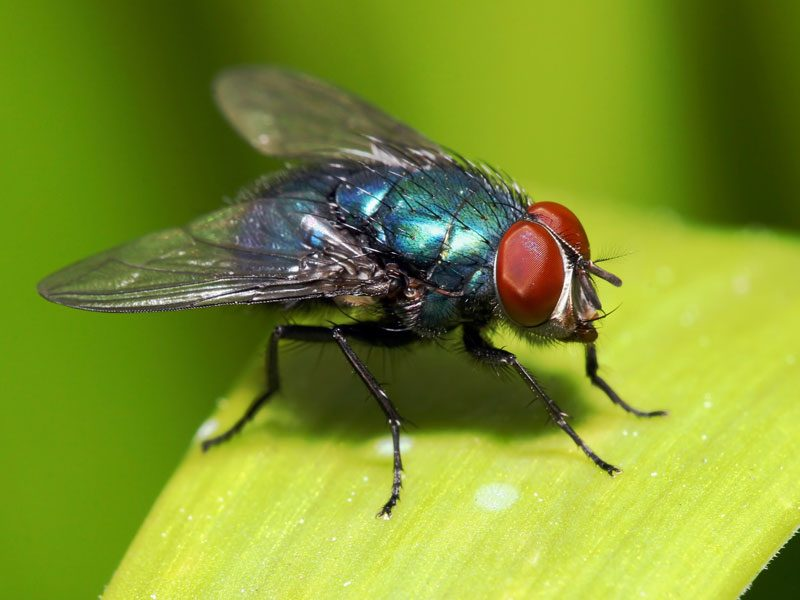 Hinder Flies From Invading Your Home
