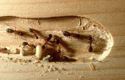 Jim's Termite & Pest Control