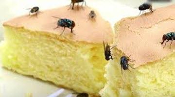 Jim's Termite & Pest Control - 131 546